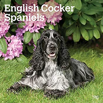 English Cocker Spaniels 2020 Calendar