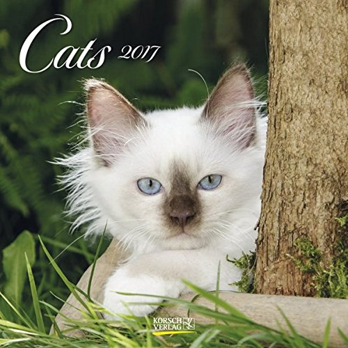Cats 2017. Broschürenkalender: Broschürenkalender mit Ferienterminen