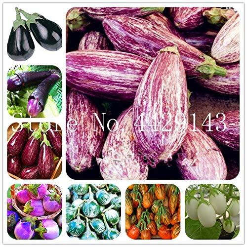 Aubergine Italienisch (Ponak Neue italienische Aubergine Bio-Gemüsesamen für schönes Garten 100 Stück gemischt)