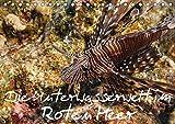 Die Unterwasserwelt im Roten Meer (Tischkalender 2017 DIN A5 quer): Einblicke in die Unterwasserwelt des Roten Meeres (Monatskalender, 14 Seiten ) (CALVENDO Tiere) -