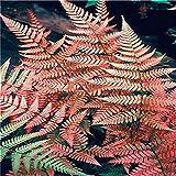 Sikena_Samen 100 Pcs Mehrjährige Farnsamen Zimmerpflanzen Samen Bonsai Samen Blumensamen