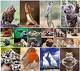 """""""LUSTIGE TIERE IV"""": 20-er Postkarten-Set mit lustigen und süssen Tieren (20 Postkarten) für Sammler und Postcrossing von EDITION COLIBRI - umweltfreundlich, da klimaneutral gedruckt"""