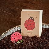 """'–Tarjeta de """"Buena suerte & Mariquita–Desde el Mayo Escarabajo crecer Flores (Semillas hecho a mano Papel)–Tarjeta de felicitación para muchos Ocasiones"""