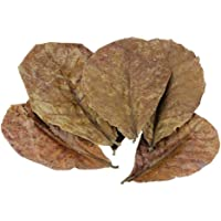 POFET 10pcs Catappa indian almond leaves ketapang leaf shrimp betta fish aquarium care Lower pH for Aquarium Fish Tank…