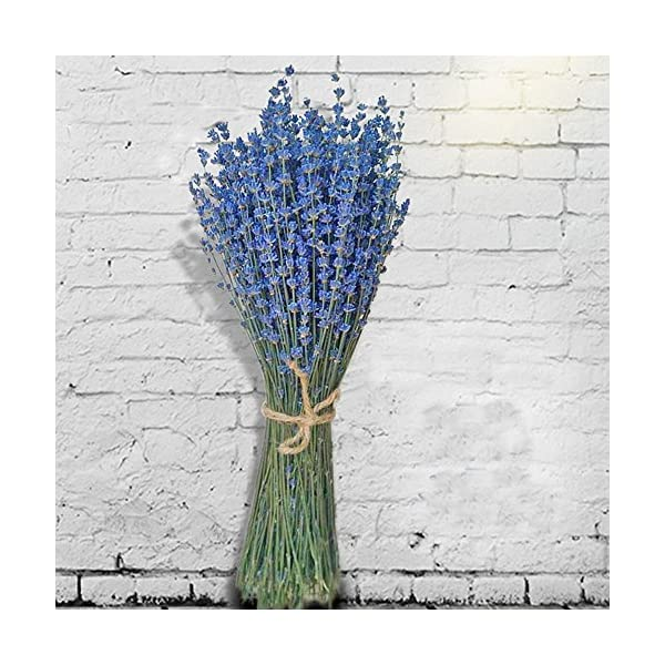 TooGet Fragantes Flores de Lavanda Secas de Lavanda Lía Ramos de Flores Naturales de Lavanda 100 Tallos (40-45cm de…