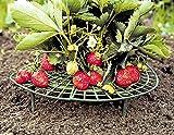 Erdbeer-Reifen (10 Stück)