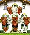 BALDUR-Garten Tiroler Hänge-Geranien-Kollektion,18 Pflanzen Pelargonium peltatum bayerische Hängegeranie Hängepelargonie Balkonblumen von Baldur-Garten - Du und dein Garten