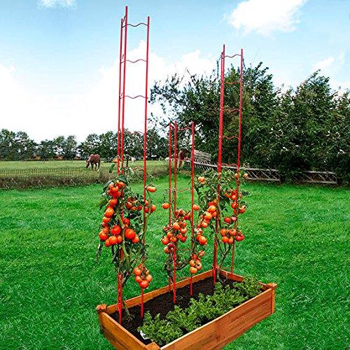 Tomaten-Rankgitter L, 2-teilig, Höhe 166 cm