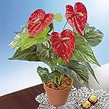 Flamingo-Blume, Kunststoff Dekorativ ohne Gießen Wetterfest 50 cm Deko künstliche Zimmerpflanze