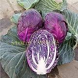 Pinkdose 200 semi di pezzi di cavolo verza frutta biologica viola e verdura per la casa giardino NO-OGM