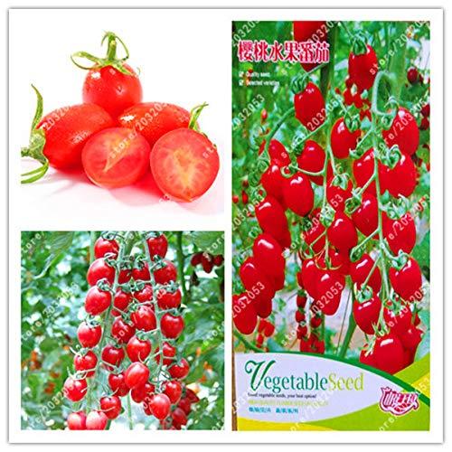 Go Garden Bonsaï Véritable Tomate Rouge en Pot, Plantes en Pot, légumes pour Maison, Jardin, Usine