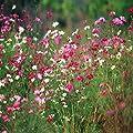 Kaimus Wildblumen Samen Blumenmischung Mix Wiese Samen Jährliche Mehrjährige Pflanzensamen Garten winterhart von kaimus auf Du und dein Garten