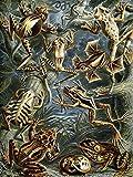 NATURE ART ERNST HAECKEL FROG TOAD BIOLOGY GERMANY VINTAGE ADVERT POSTER 1786PY