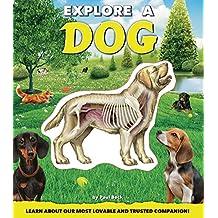 Explore a Dog