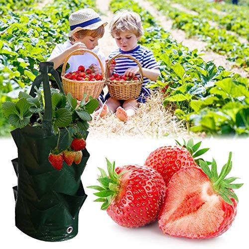 Sue-Supply 2 Stück Erdbeer-Pflanztasche für Gartenarbeit Blumen-Übertopf Luftpflanze feuchtigkeitsspendende atmungsaktive Tasche Garten Werkzeug Kit 3 Liter dunkelgrün (Garten-werkzeug-kit)
