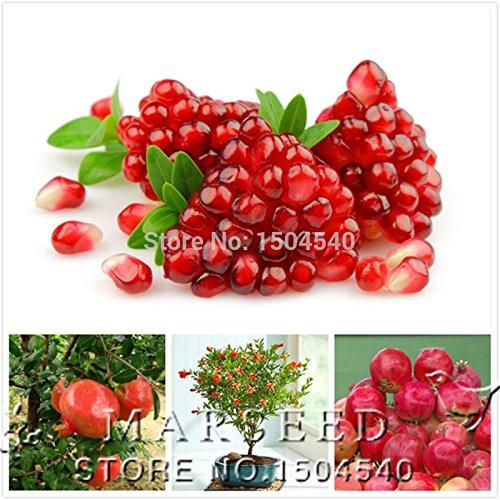 20 pcs / sac grenade Fleur graines végétales maison délicieux fruits graines très grandes et douces pour la maison jardin plante germination 95%