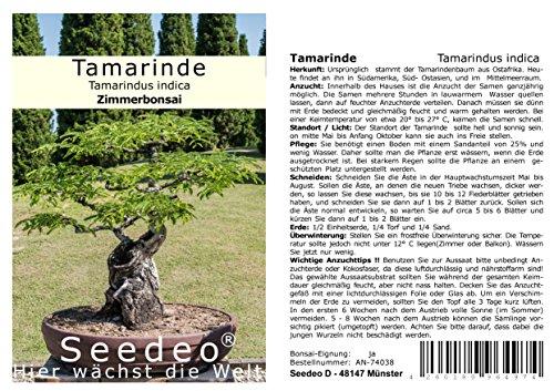 Seedeo Bonsai Anzuchtset Tamarinde (Tamarindus indica)
