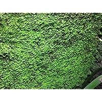 3litros Ben 's Rainforest Background modellier turba Crear y begrünung la terrarios Posterior