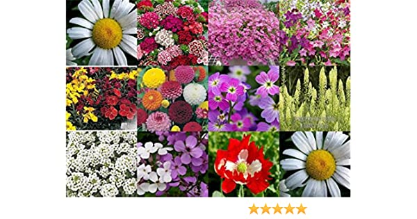 MEADOW WILD FLOWER BUTTERFLY /& BEE MIX SEEDS poppy cornflower oxeye 1kg