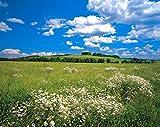 Fototapete MEADOW 368x254 Bergwiese Blumen Alm Sonne Blumenwiese Frühlingswiese