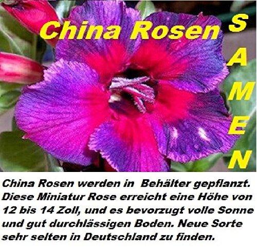 20x Cina Rose Seme Semi di fiori Fiore Pianta Rose Giardino Rarità novità molto raro (Rose Garden Di Bambù)