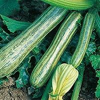 Portal Cool Vegetales Calabacín rayas de Italia 40 Semillas Finest