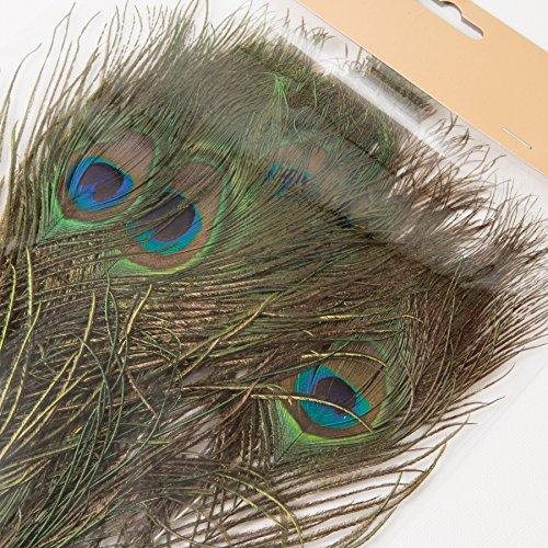 ROSEMARIE SCHULZ® Heidelberg 12 natürliche Pfauenfedern 25-30cm lang - Federn zum Basteln, Schmücken und zur Dekoration (Do It Yourself Kostüme)