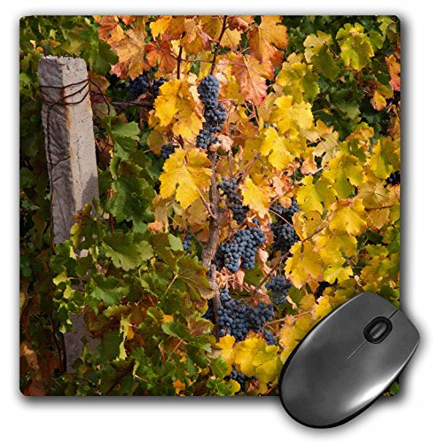 danita-delimont-grapes-china-ningxia-merlot-grapes-at-domaine-helan-mountain-winery-mousepad-mp-2068