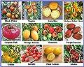 Tomatensamen Sortiment, seltene alte Sorten, samenfest und Kältetolerant, für kurzen und kühleren Sommer gut geeignet, Rarität von Traumgarten2014 - Du und dein Garten