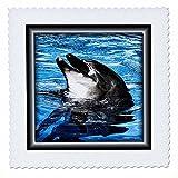 3dRose qs_41415_1 Smile of a Delfin, quadratisch, 25,4 x