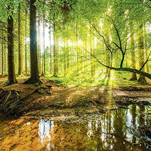 Artland Qualitätsbilder I Glasbilder Deko Glas Bilder Landschaften Wald Foto Braun D8SDWald mit Bach