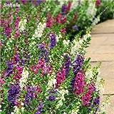 Happy Farm Gypsophila Estrellas del cielo Semilla híbridos semilla de flor del jardín de Paisajismo decorativo, planta de flor perenne 150 PC 3
