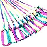 Bunte Haustier-Leine-Kabelstrang -Seil-Kette reizender Regenbogen -Farben-Straps