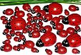 50 Stück Glücksdeko Glücksbringer Marienkäfer Holz ca 1,2+2+3,5 cm lang tolle Glücksfiguren / Glücksbringer / Silvester / Neujahr 5360