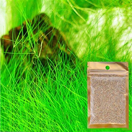 as Gras Samen Glück Gras Liebe Gras Leben Pflanze Samen Aquarium Ornamental Dekorative Samen Wasserpflanze ()