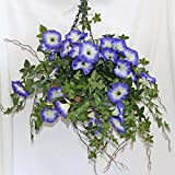 Homescapes Kunstblume Prunkwinde Lila in Hängeampel Künstliche Morning Glory im Topf Zum Hängen Frühlingsdeko