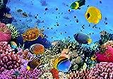Fototapete Korallenriff mit Fischen L 300 x 210 cm - 6 Teile Vlies Tapete Wandtapete - Moderne Vliestapete - Wandbilder - Design Wanddeko - Wand Dekoration wandmotiv24