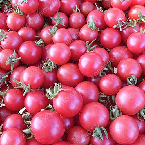 100 graines / paquet Graines rares Noir tomate très savoureux Nutritive bruyères Légumes Graines Bonsai pour jardin plantation Easy Grow orange