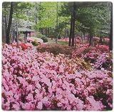 3drose LLC 20,3x 20,3x 0,6cm Georgien, pine Mountain. Garten Pavillon Julie Eggers Mauspad (MP _ 89330_ 1)