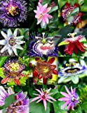 15 Samen Blütepassi Mix Passionsfrucht Exotische Essbare tropische Kletterpflanze Samen