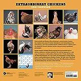 Image de Extraordinary Chickens 2018 Calendar