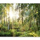 murando - Fototapete Wald 200x140 cm - Vlies Tapete - Moderne Wanddeko - Design Tapete - Wandtapete - Wand Dekoration - Wald Landschaft Natur Sonne Grün Bäume Sonnenuntergang c-C-0032-a-b