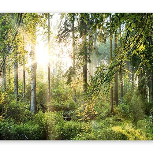 murando - Fototapete Wald 400x280 cm - Vlies Tapete - Moderne Wanddeko - Design Tapete - Wandtapete - Wand Dekoration - Wald Landschaft Natur Sonne Grün Bäume Sonnenuntergang c-C-0032-a-b
