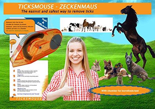 Zeckenentfernung für Mensch und Tier, Zecken entfernen einfach und sicher bei Hund, Katze und Pferd.