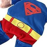 DIGIFLEX Haustier Superman Kostüm, Superhelden – Fasching/Fastnacht, Halloween – Outfit für kleine Hunde oder Katzen bis 25cm Hals - 4
