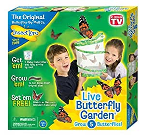 Insect Lore Butterfly Garden Life Biology Educational Learning School Kids