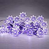 Battery Operated 20 Purple Decorative LED Daisy Flower Fairy String Lights