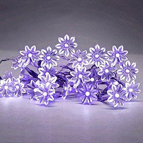 MiniSun – Schöne, moderne und batteriebetriebene Lichterkette mit 20 lila