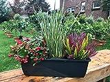 Herbst Balkonkasten 40cm breit, Winterheide, Calluna vulgaris Trio Milka (Knospenheide, Besenheide), Gras grün/weiss & Scheinbeere