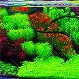 KINGDUO Egrow 1000 Pcs Aquarium Plantes Graines Pin Arbre Semillas Raras Plantas Aquatique Fish Tank Arbres-Vert